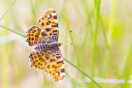 Beautiful spring butterfly sitting on plant on meadow in sunny day. Stock Photo