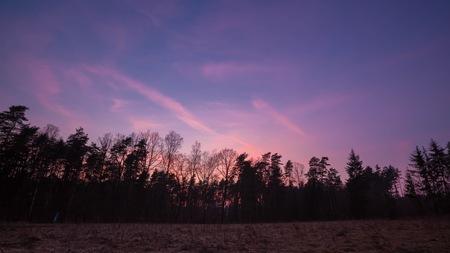 Evening after sunset sky over forest. Natural landscape Zdjęcie Seryjne