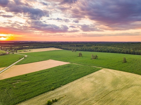 Beautiful summer fields from above. Aerial landscape with beautiful wheat fields, Stock Photo