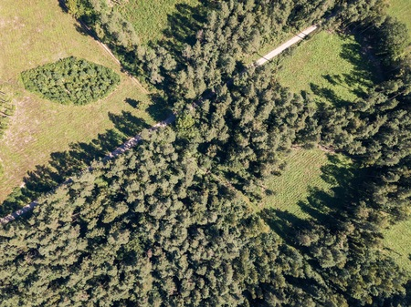 Forest seen from above. Drone landscape with European forest.