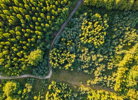 Aerial landscape with forest in sunset light. Beautiful drone landscape.
