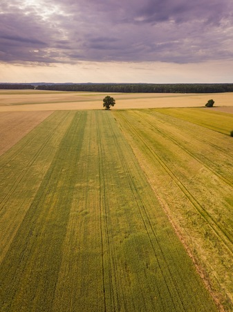 Beautiful summer fields from above. Drone photography of summer polish fields.