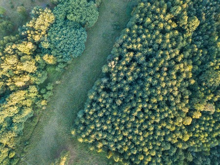 Wild forest landscape photographed from drone. Aerial view of european forest and meadows.