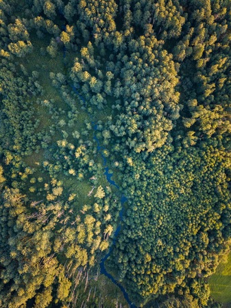 Wild european forest with small stream. Drone landscape Stock Photo
