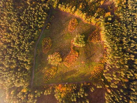 Aerial top down landscape with beautiful autumn forest from above. Birds eye landscape. Stock Photo