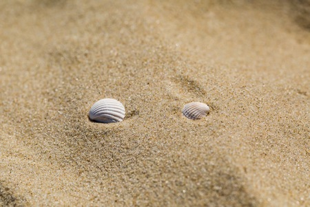 Small shells lying on sandy sea shore. Close up of beach sand and its structure. Stock Photo