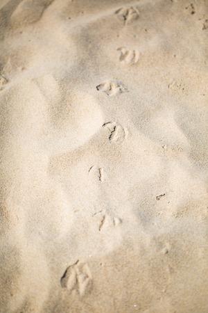 Close up of sandy sea shore. Sand structure lighten by strong summer sun.