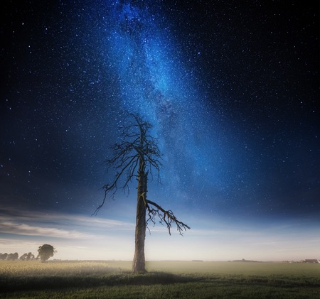 Surreal night and village landscape with dead tree landscape with starry sky. Dreamy look.