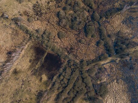Beautiful landscape with forest photographed from drone. Polish forest. Zdjęcie Seryjne