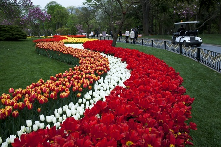 Road Of The Tulips photo