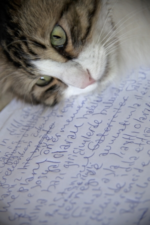 page down: A sleepy tabby cat lie down on a paper, maybe a new books first page or just a letter.