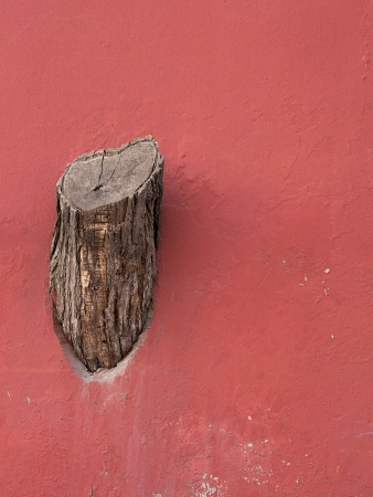 destroying: Tree stump on the wall  About people destroying the nature