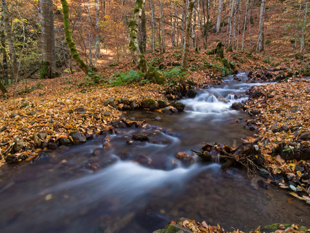 A beautiful stream and autumn scene at Yedigoller National Park  Which is a famous national park at Bolu,Turkey  photo