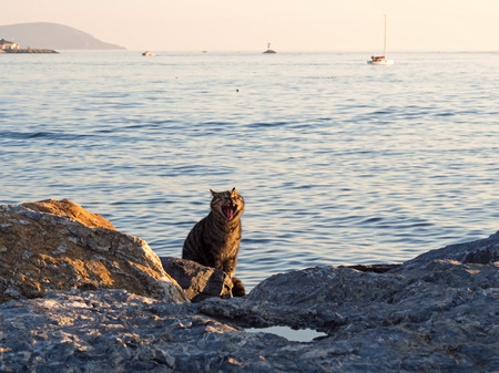 kadikoy: Yawning Cat Near The Sea