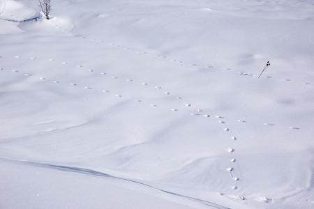 animal tracks: Animal Tracks On The Snow