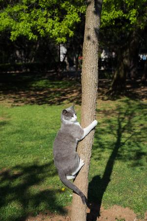 shadowy: Wild Cat Climbing To Tree