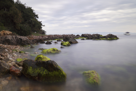 seaweeds: Long Exposured Rocky Beach with Green Seaweeds On The Rocks