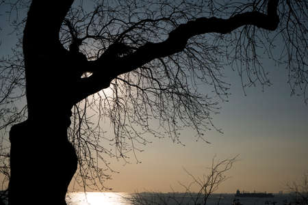 Silhouette of a tree in sunset time at Istanbul, Moda. Stock Photo