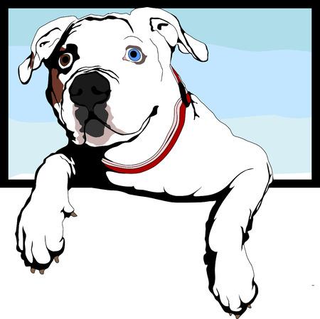 nosy american bulldog