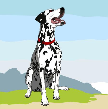 obedient: Obedient dalmatian