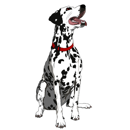 tittle: Obedient Dalmatian