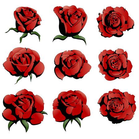 nine red roses Illustration