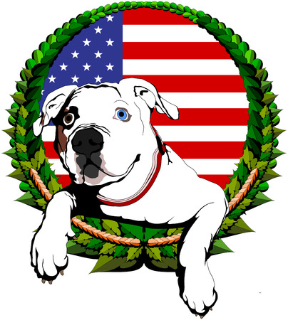 American bulldog with American flag background