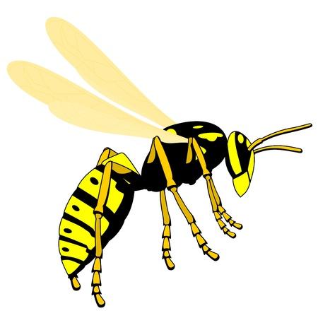 mosca caricatura: avispas volando