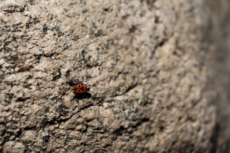 Insect creeping on a stone Editorial