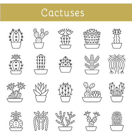 Cacti of different forms and shapes. Set of desert plants for terrariums and rock gardens.