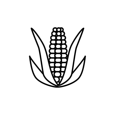 Black & white vector illustration of ear of corn with leaves & kernels. Line icon of fresh organic maize. Vegan & vegetarian food. Health eating ingredient. Isolated object on white background.