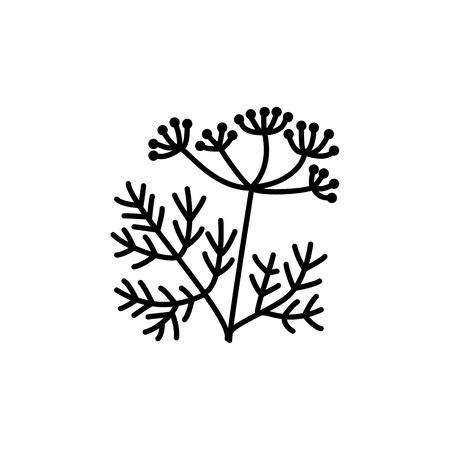 Illustrazione vettoriale in bianco e nero di finocchio con semi e foglie. Icona della linea di erbe aromatiche saporite. Condimento e spezie. Cibo vegano e vegetariano. Oggetto isolato su sfondo bianco. Vettoriali