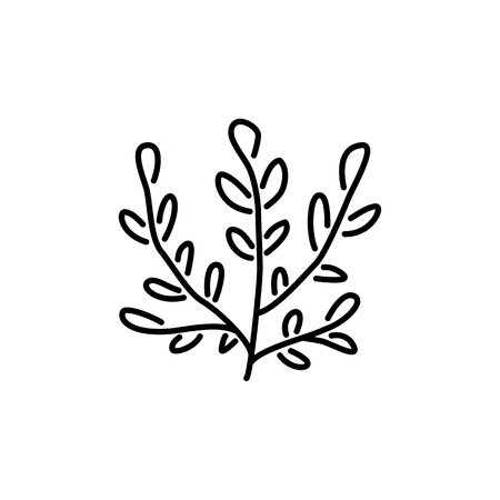 Black & white vector illustration of ornamental herb with leaves. Line icon of decorative outdoor green foliage plant. Gardening & landscaping. Isolated object on white background.