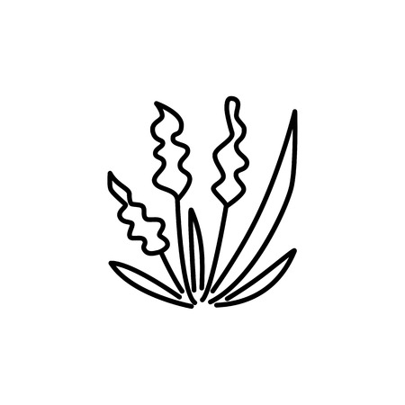 Black & white vector illustration of ornamental herb with spikes. Line icon of decorative green foliage plant. Gardening & landscaping. Isolated object on white background