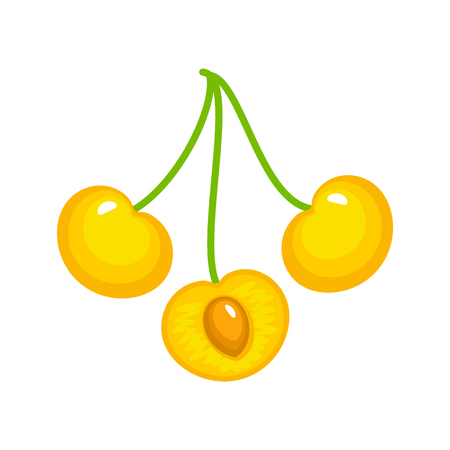 Vector illustration of three white ripe cherries with stem & seed. Flat icon set of organic fresh berries branch. Isolated object on white background Stock Illustratie