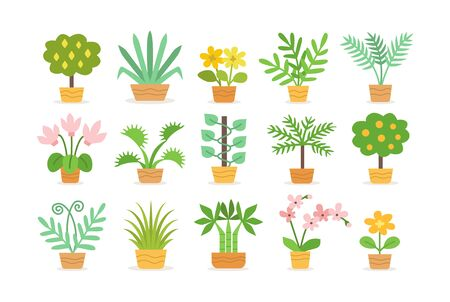 Indoor garden plants in pots. Tropical potted plants isolated on white. Vector flat icon set.