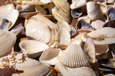Shells, many small shells heaped together forming a beautiful background, selective focus.