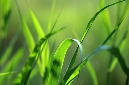 green grass Stock Photo - 235754