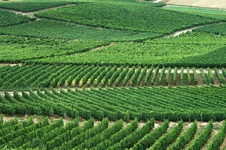 green vineyards. Germany