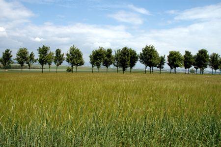 rural skyline: summer countryside