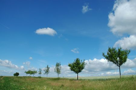 trees and blu sky with clouds