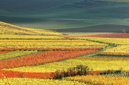 vineyards in autumn colors Stock Photo
