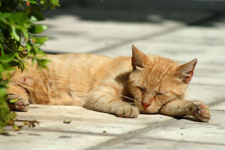 Sleeping Street Cat photo