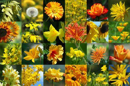 Orange-yellow flower collection Stock Photo - 264025