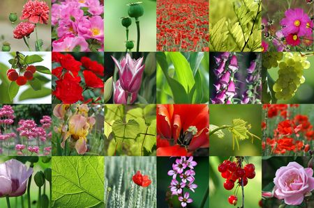 Pink and red flower collection. Stock Photo