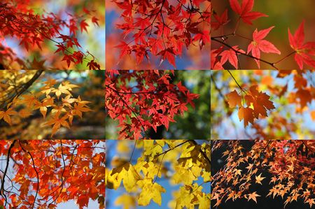 maple collection Stock Photo - 264023