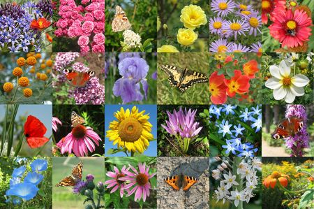 Butterfly and flower collection Stock Photo - 274380