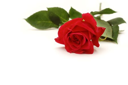 Red Rose Stock Photo - 283732