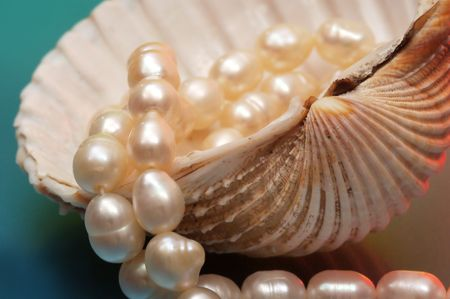 Pearls and sea shell Stock Photo