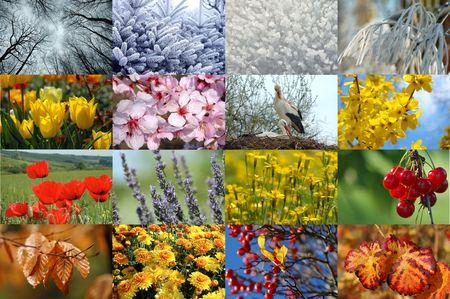 Four seasons Stock Photo - 310010